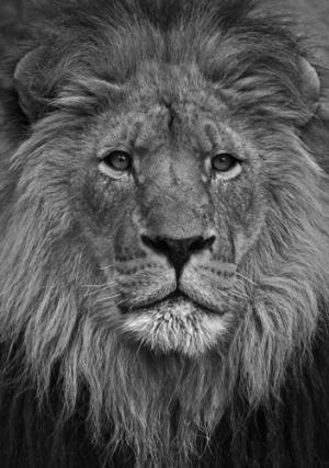 King of Beasts, Colorado, 2008