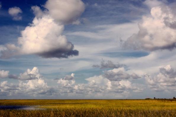 FL Everglades _0728 7
