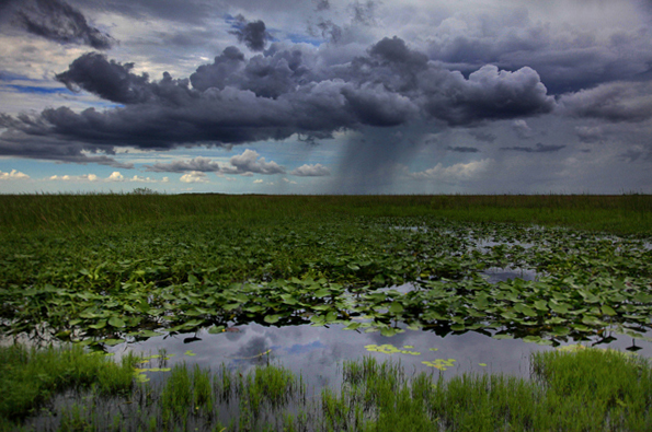 Everglades Adventures From Behind The Glass
