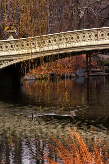 Central Pk Bridge and Ducks Vert_6314_417 w