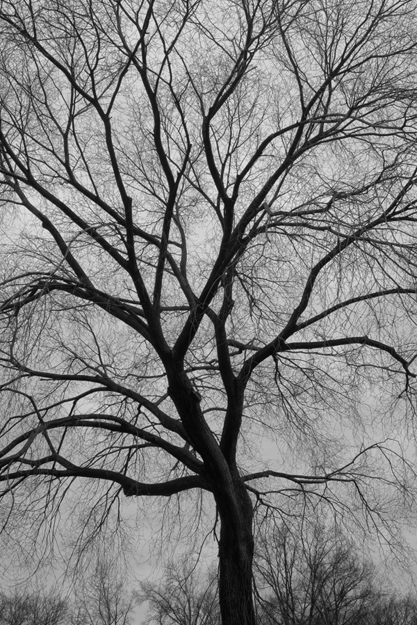 Central Pk Tree Nik 6324_625 H