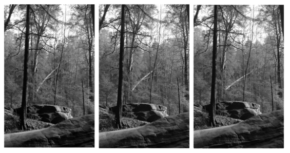 HH Tree falling triptych BW 600_edited-1