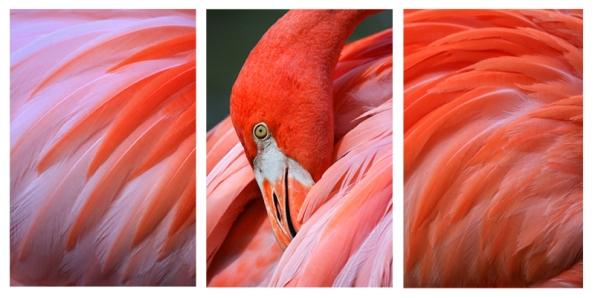 Flamingo Triptych