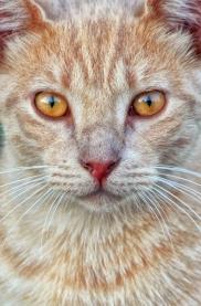Feral Cat Albino FINAL 9831