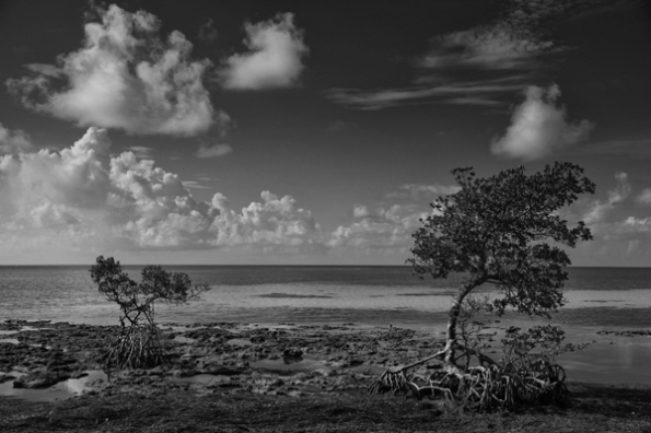 Keys Two Trees_0861_BW