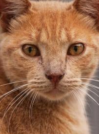 Feral Cat Vanilla_0295