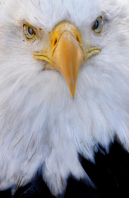 Eagle FINAL 418w_edited-1