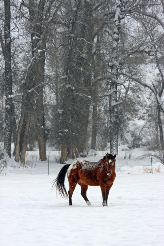 Equine Snow Scene