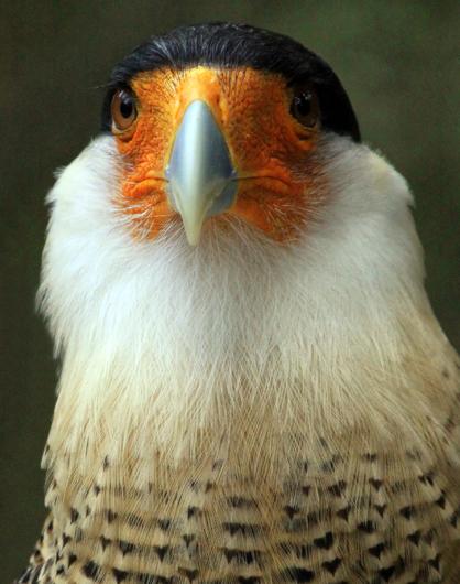 6 Bird_2211_edited-1
