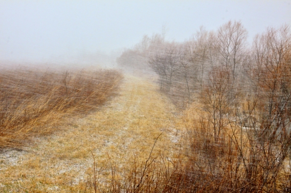1000 Snowstorm_8752_edited-3