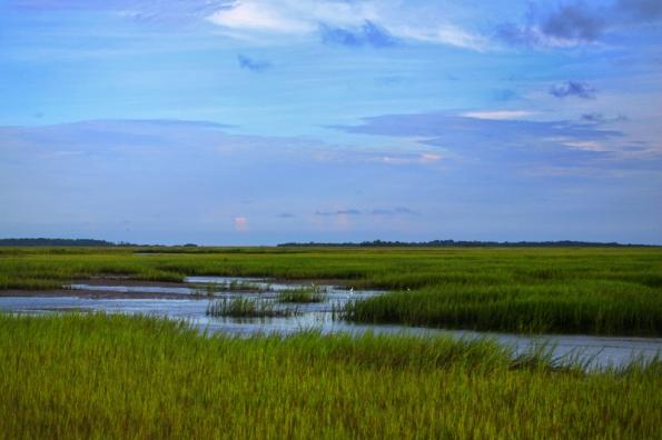 Egrets, Tybee Marsh 800w