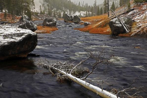 River of Fallen Trees