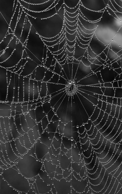 web-bw-9280-crop-417