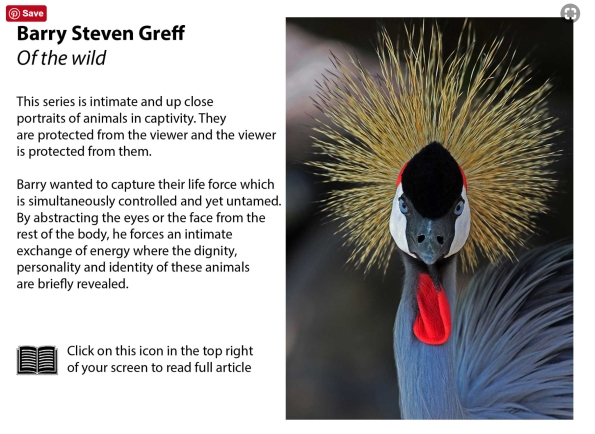 African Crowned Crane text crop